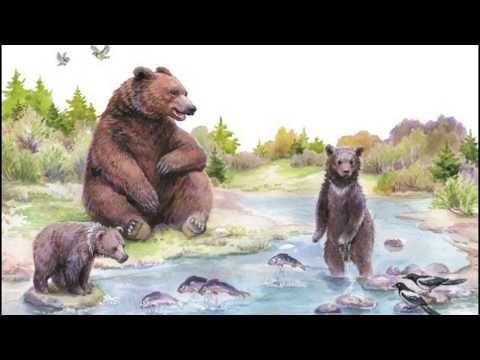 Купание медвежат||Бианки Виталий Валентинович|| Аудиорассказ