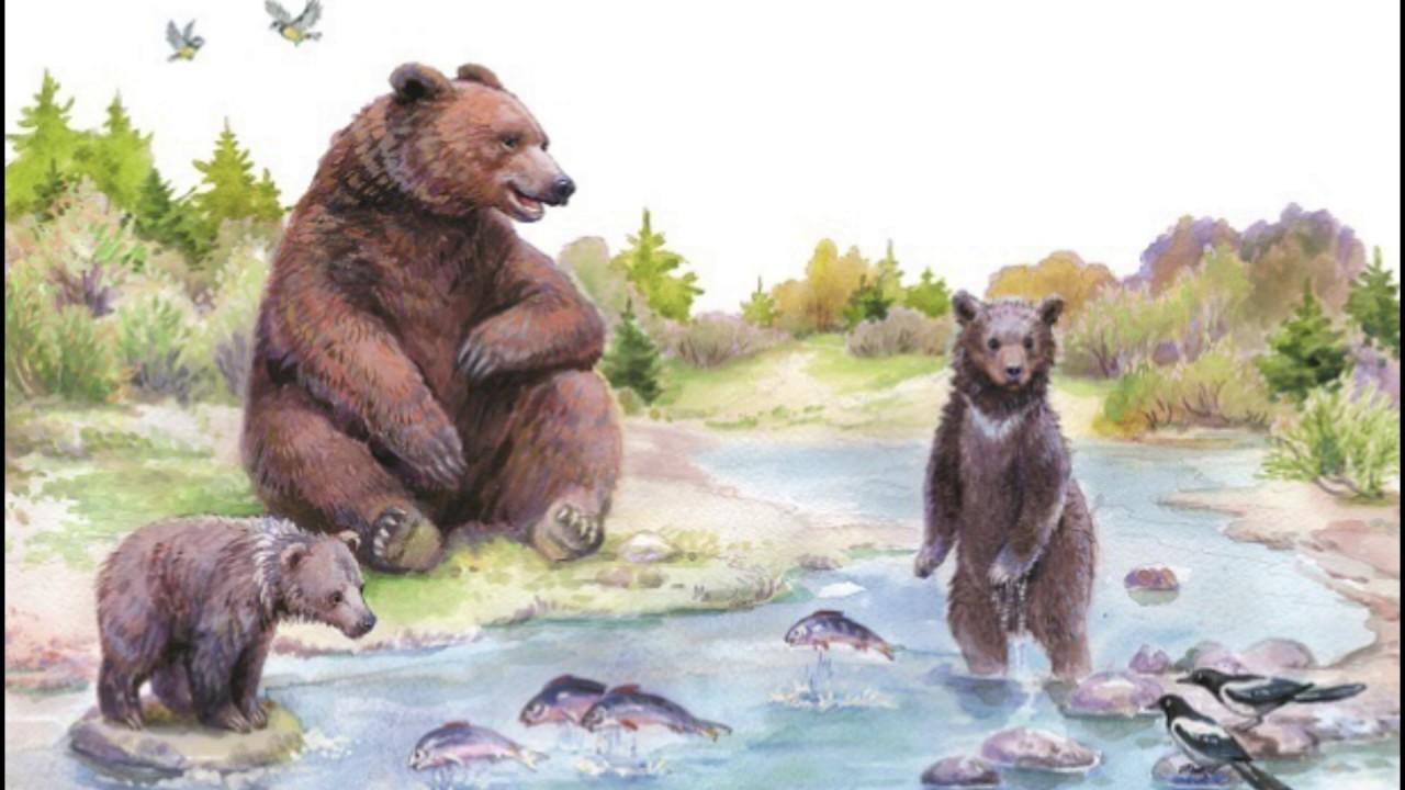 иллюстрации к рассказу в бианки купание медвежат деле приготовления
