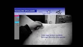FÁJDALOM LOVAKBAN 2.1. Kisugárzó fájdalom és dermatómák a lovon - FitoCavallo®