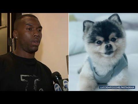 Daniel Sturridge's dog stolen from soccer star's Hollywood Hills home in alleged break-in | ABC7