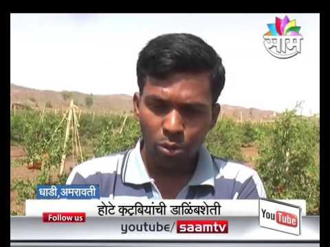Pomegranate Farming by Zero Budget Natural Farming Technique