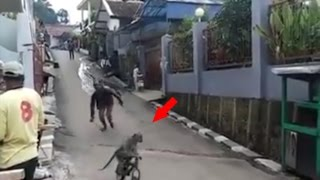 Funny Videos ★ Funny Monkey Riding Bicycle ★ Funny Videos 2016