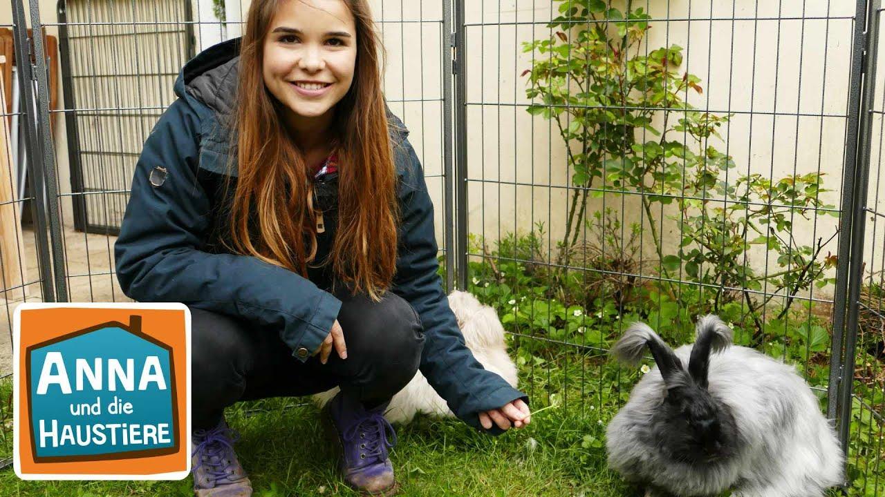 Angorakaninchen Information Fur Kinder Anna Und Die Haustiere Youtube