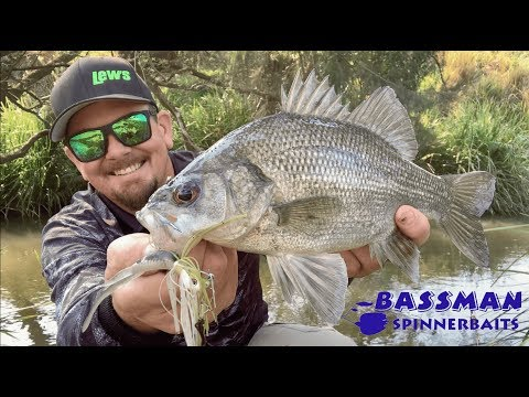BASSMAN SPINNERBAITS | Australian Bass Creek Fishing.