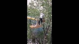 Вырубка деревьев в Бишкеке