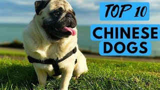 Chinese dog breeds. Everything you need to know about dog breeds de...