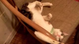 My cat Sampson