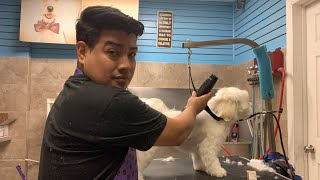 How to groom a Maltese/ Dog grooming in Queens NY