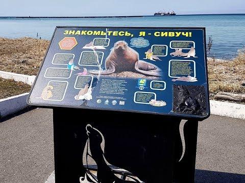 Сивучи, Невельск. Горный воздух, Южно-Сахалинск. 21.04.2019