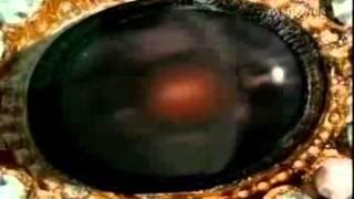 Estrambotica Anastasia Capítulo 1 (E)