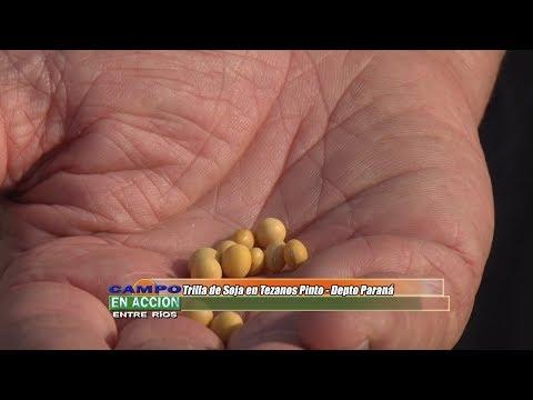 Walter Restano - Cereales Bolzán SRL - Trilla de soja en Tezanos Pinto