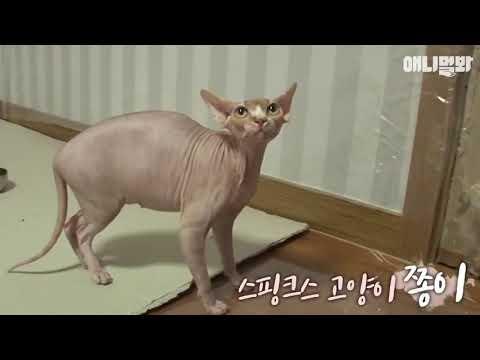 Вопрос: Что делать с котом, который кидается на хозяев?