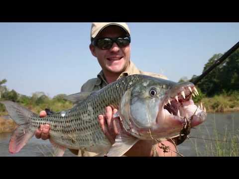Top 10 pești care vânează animalele terestre