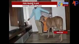 ગાય આપણી માતા છે||مثلي الجنس aapni ماتا chhe||a إلى z خلق صخرة