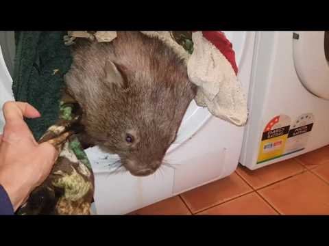 Tim Palmer - Don't You Hate It When Your Wombat Gets In The Dryer?
