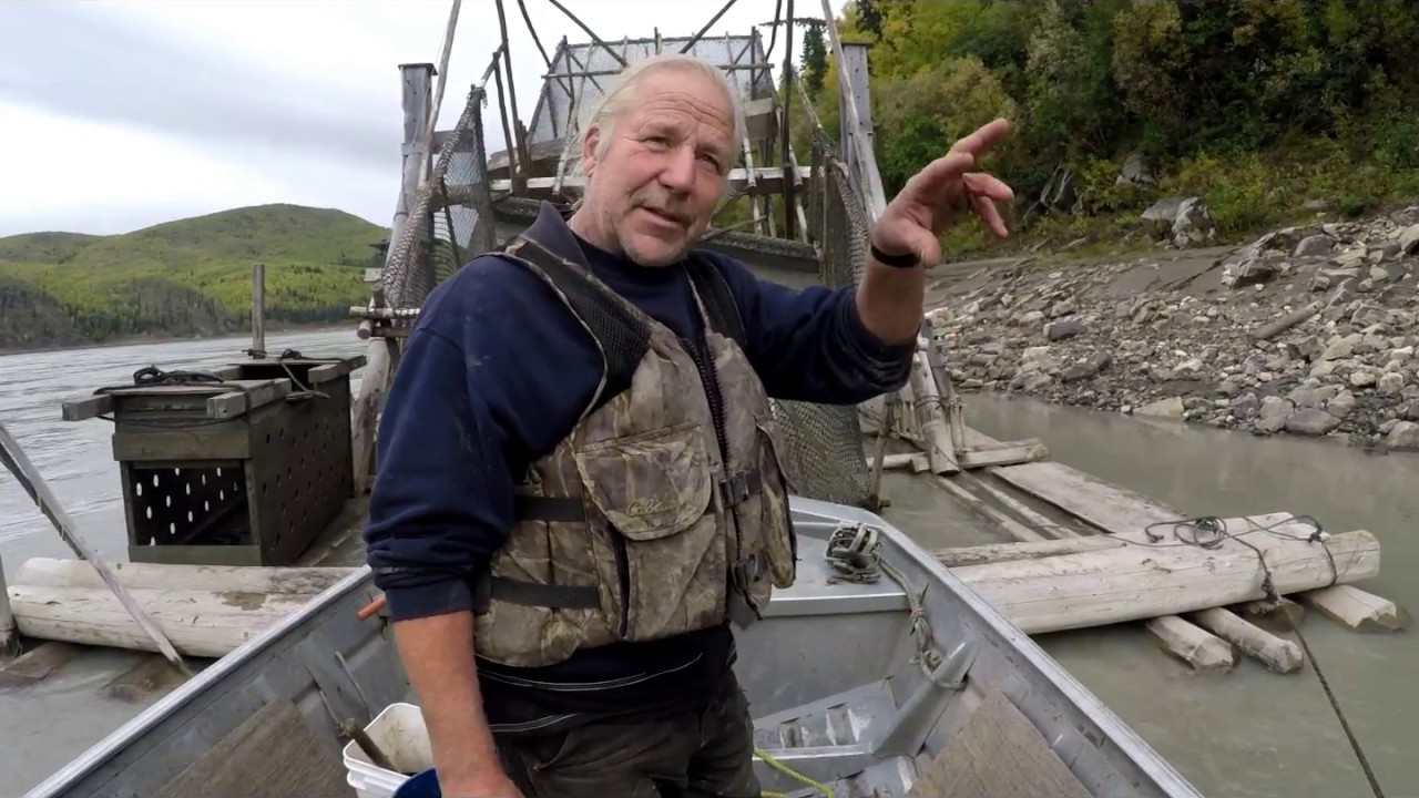 Pulling a fish wheel out of the yukon river stan zuray for Alaska fish counts