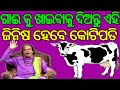 ଗାଈକୁ ଖାଇବାକୁ ଦିଅନ୍ତୁ ଏହି ଗୋଟିଏ ଜିନିଷ ହେବେ କୋଟିପତି Odia Baya Gita Sadhubani Nitibani Anuchinta