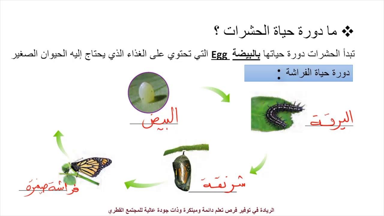 العلوم إثرائي صف 4 دورة حياة الأسماك والبرمائيات والحشرات Youtube