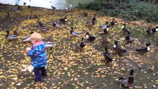 Feeding ducks on the river in Abingdon