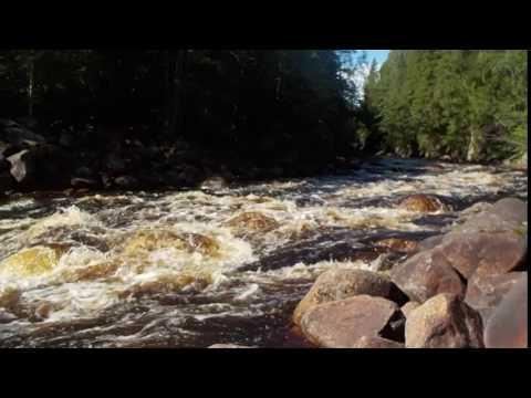 Discovering Swedish nature