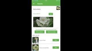 PlantSnap identifies a Hoya wallichii