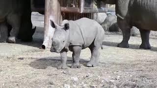 Очень смешные дикие животные.  Видео приколы с дикими животными.