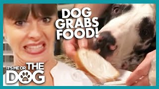 Uninvited Guest for Dinner | It's Me or the Dog
