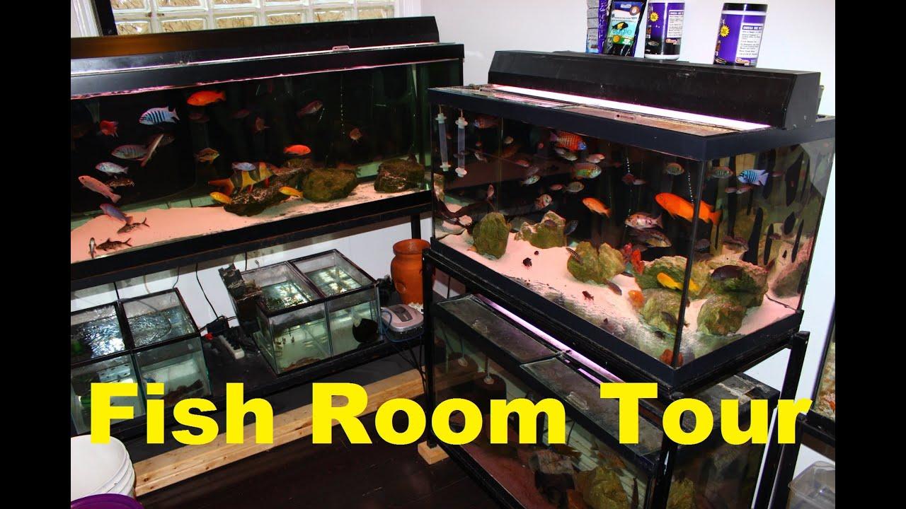 Fish for aquarium games - Fish Tank Aquarium Room Tour