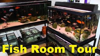 fish tank aquarium room tour