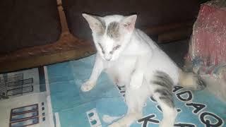 Hallo sahaba satwa, ikuti case story kucing lily yang datang ke klinik dalam kondisi kejang dan susa.