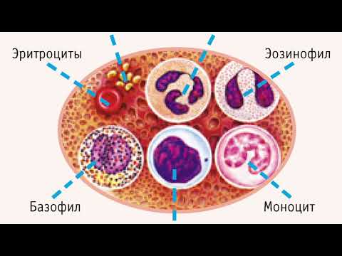 Анализы крови (FULL edition)