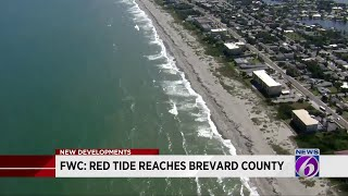 Red tide found in Brevard County