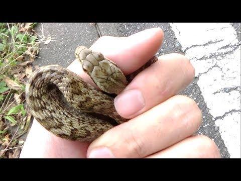 ヤバそうな模様のヘビを握ってみた。