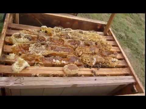 transvasement ruchette à ruche