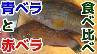 いつもリリースしてる魚を刺身で食べると美味かった!!