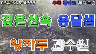 (no 53) 숲속 옹달샘 왕자두 과수원 영천제일공인중…