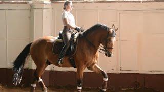 ~ Equestrian Sport ~ Show Jumping ~ Dressage ~ Конный спорт~ Конкур ~ Выездка ~ Stranger Things ~