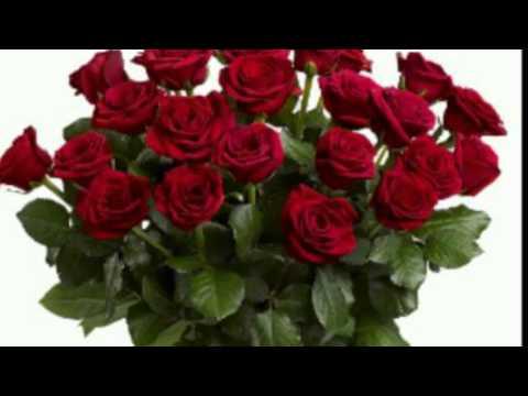 Two dozen roses by Shenandoah