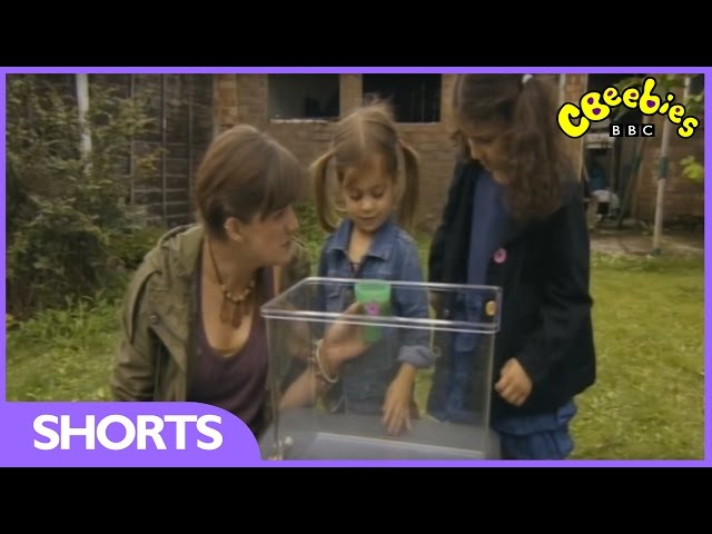 CBeebies: Minibeast Adventure With Jess - Snail Adventure