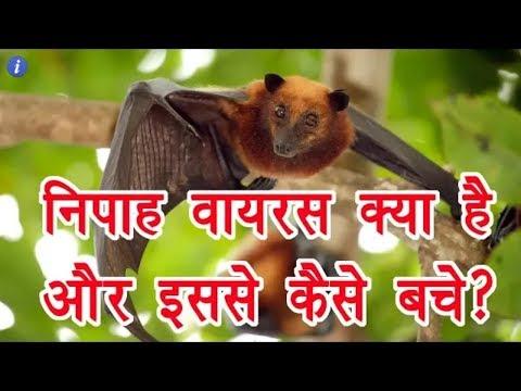 What is Nipah Virus _ निपाह वायरस क्या है ओर इससे कैसे बचें