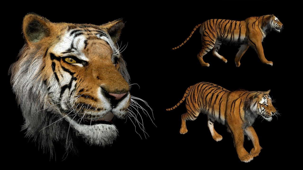 cg tiger tutorial preview