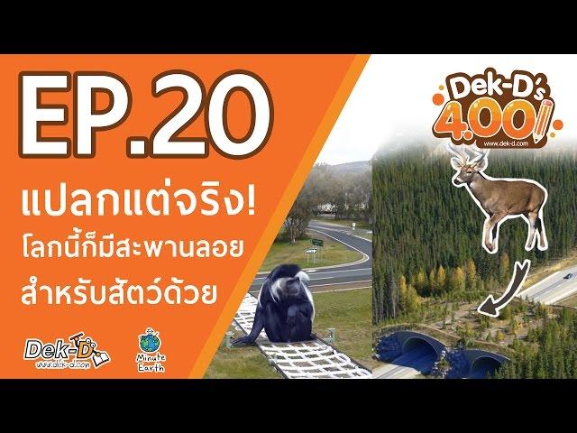 [DEK-D 4.00:EP.20] แปลกแต่จริง! โลกนี้ก็มีสะพานลอยสำหรับสัตว์ด้วย