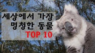 [랭킹트리] 세상에서 가장 멍청한 동물 top 10