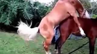 ilginç hayvanlar komik comedy075