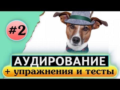 Аудирование по английскому языку. Английский на слух. Урок 2 Animals Животные