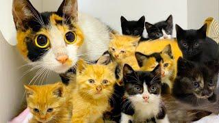 """【和貓住】地溝掏貓窩一根貓條""""騙""""來11只貓這個冬天你們不再寒冷"""
