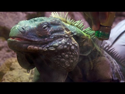Wild Inside the National Zoo: Reptile Rejuvenation