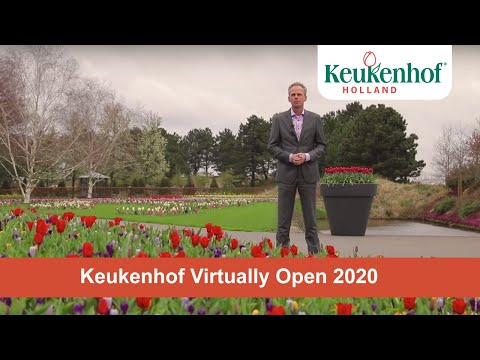 Keukenhof virtually open - We will bring Keukenhof to you!