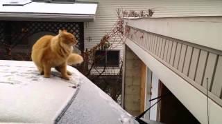 Cats Funny/ Waffles The Terrible Funny Cat Fails Epic Jump