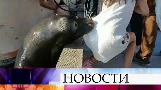 ВКанаде морской лев утащил ребенка под воду, девочку спасли.